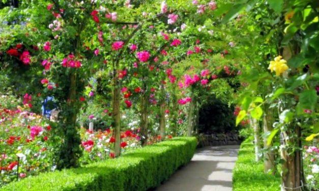 Curso de Jardinagem e Paisagismo Online