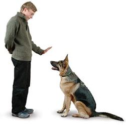 Curso de Adestramento de Cães Online com Certificado