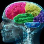 Neuropsicologia O que é ?
