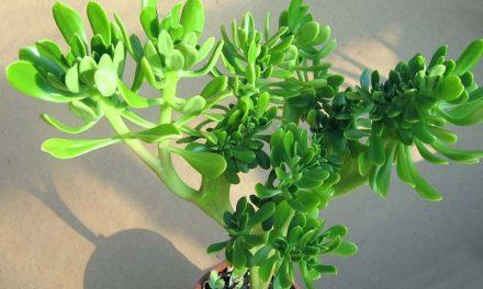 Curso de Plantas Medicinais Online