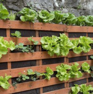 como plantar horta em casa